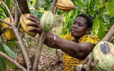 Cocoa – pulling on the threads of liberation