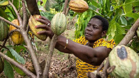 Photo of a Cocoa worker